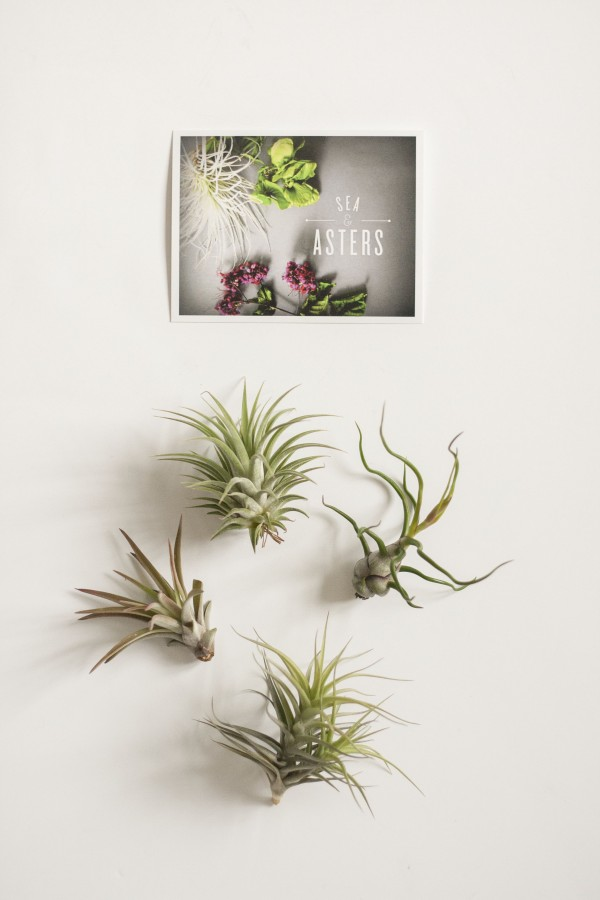 Easy as d i y floral wire air plant holder dream green diy for Air plant holder ideas
