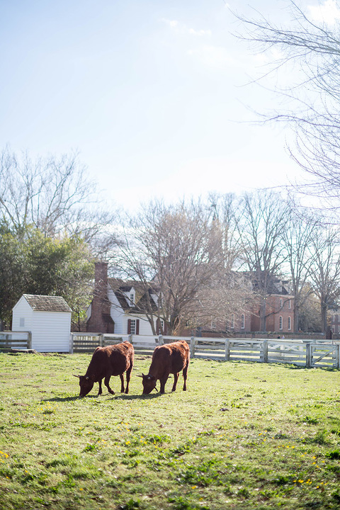 Springtime In Colonial Williamsburg | Dream Green DIY