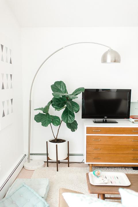5 Low Maintenance Houseplants To Adopt This Season | dreamgreendiy.com
