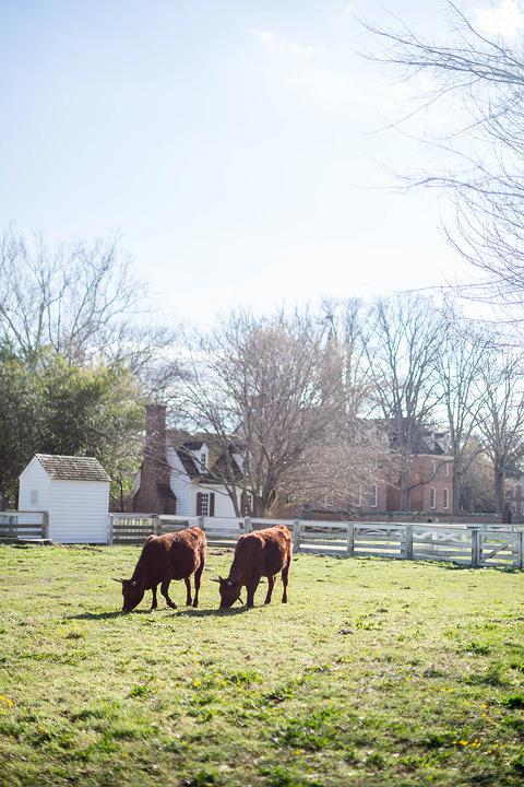 Springtime In Colonial Williamsburg   Dream Green DIY