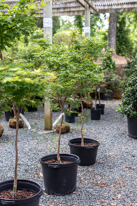 Japanese Landscaping Ideas To Consider